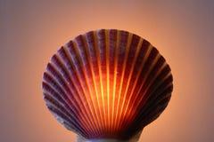 Lámpara del shell Foto de archivo libre de regalías