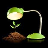 Lámpara joven del brote y de vector fotos de archivo