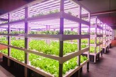 Lámpara llevada del crecimiento vegetal usada en agricultura vertical imagen de archivo