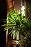 Lámpara tímida Imagen de archivo libre de regalías