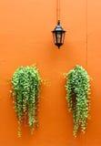 Lámpara vieja con las plantas verdes en la pared Imágenes de archivo libres de regalías