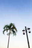 Lámpara y palma Imagen de archivo