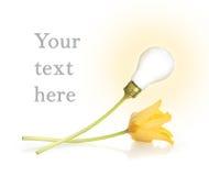 Lámpara y tulipán fotos de archivo libres de regalías