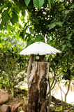 Lámparas del jardín Foto de archivo libre de regalías