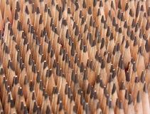 Lápices de madera sostenidos Foto de archivo libre de regalías