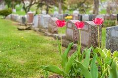 Lápidas mortuorias en un cementerio Fotos de archivo