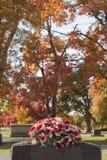 Lápide vermelha de Rosa Imagens de Stock