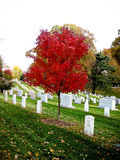 Lápides no cemitério nacional de Arlington Imagem de Stock Royalty Free