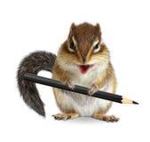 Lápis engraçado da posse do esquilo, isolado no branco Imagem de Stock Royalty Free