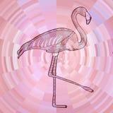 A lápis preto desenho do flamingo no fundo cor-de-rosa abstrato do círculo composto da tira Fotografia de Stock Royalty Free