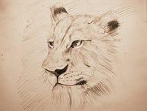 Lápiz del retrato de la cara del león que bosqueja en el papel viejo con tono de la sepia fotografía de archivo libre de regalías