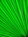Lâmina de grama Imagem de Stock