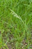 L?mina de grama em um fundo brilhante verde fotos de stock royalty free