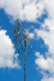 Lâmina de grama seca Foto de Stock Royalty Free