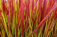 Lâminas coloridas da planta Fotografia de Stock