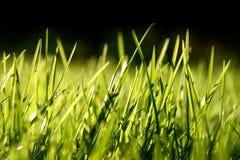 Lâminas da grama Fotografia de Stock Royalty Free