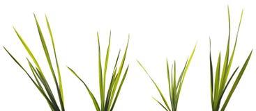Lâminas da grama isoladas no branco fotografia de stock royalty free