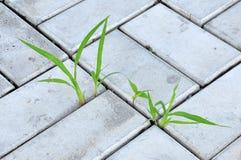 Lâminas de grama Foto de Stock