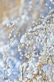 Lâminas de grama com flocos da neve Foto de Stock Royalty Free