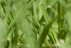 Lâminas de grama macro Foto de Stock