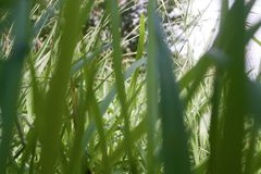 Lâminas do papel de parede do fundo da grama Imagens de Stock