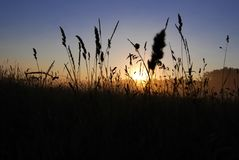 Lâminas e grama de encontro ao nascer do sol Fotos de Stock Royalty Free