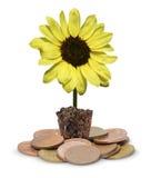Lâmpada amarela da flor na moeda Foto de Stock