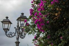 Lâmpada com flores Imagem de Stock