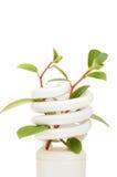 Lâmpada da economia de energia com o seedling verde no branco fotografia de stock