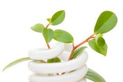 Lâmpada da economia de energia com seedling verde imagem de stock
