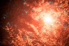 Lâmpada de rua de incandescência entre as folhas de uma árvore Fotografia de Stock Royalty Free