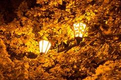 A lâmpada de rua nas folhas das árvores do outono Fotos de Stock