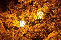 A lâmpada de rua nas folhas das árvores do outono Fotografia de Stock