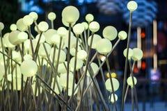 Lâmpada dourada do cogumelo da agulha. Imagem de Stock