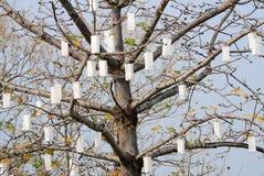 Lâmpada na árvore Fotografia de Stock Royalty Free