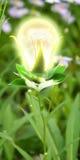 Lâmpada verde Imagem de Stock
