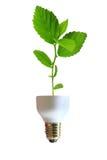 Lâmpada verde Imagem de Stock Royalty Free