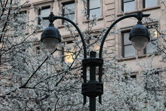 Lâmpadas da torre na rua que tem flores no fundo Fotos de Stock Royalty Free