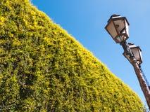 Lâmpadas de rua Imagem de Stock