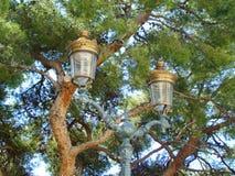 Lâmpadas de rua de bronze na frente do pinho Fotos de Stock Royalty Free