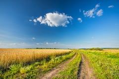 Ländliche Landschaft mit Bodenstraße, Weizenfeld und blauem Himmel in einer Landschaft lizenzfreie stockfotografie