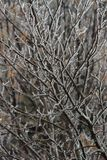 Lód na gałąź iced drzewo zdjęcia royalty free
