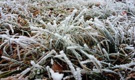 Lód na trawie zdjęcia stock