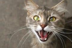 Lächeln der Katze Stockbild