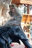 Lächeln des Affen Lizenzfreies Stockfoto
