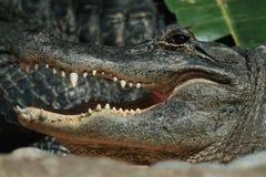 Lächeln des Krokodils Stockfoto