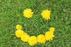 Lächeln des Löwenzahns auf grünem Gras Sommerstimmung, lächelnde Blumen Stockbilder
