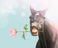 Lächeln-Pferd mit Rosarose auf blauem bokeh Hintergrund Stockbilder