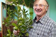 Lächelnde älterer Mann kümmernde Houseplantzitrone Stockbilder