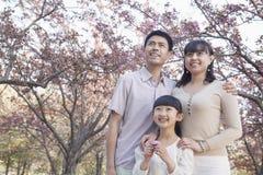 Lächelnde Familie, die oben und Bewundern der Kirschblüten im Park im Frühjahr, Peking schaut Stockbild
